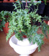 5.plantas_suerte.jpg