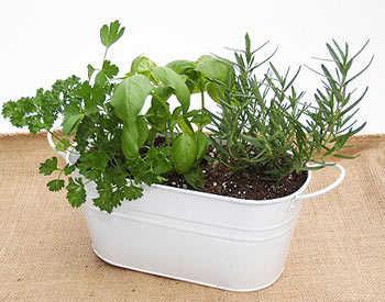 Ideas para tener un macetero de hierbas casero jardin - Quitar mal de ojo en casa ...