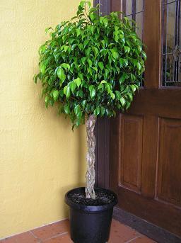 Cu les son las plantas apropiadas para cada ambiente de la - Plantas altas de exterior ...