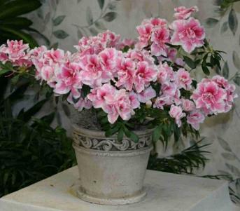 Plantas decorativas f ciles de cuidar jardin decora - Plantas decorativas de interior ...