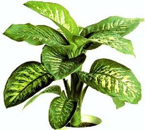 Plantas decorativas f ciles de cuidar jardin decora for Plantas de interior decorativas