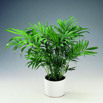 C mo darle brillo a las plantas del interior de la casa for Plantas decorativas de exterior