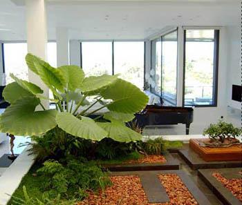 C mo darle brillo a las plantas del interior de la casa for Plantas de interior hojas grandes