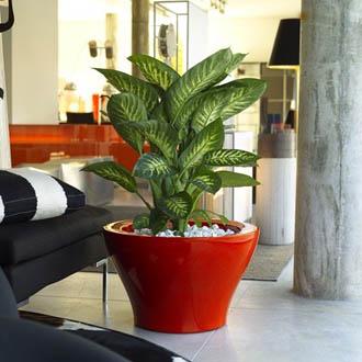 C mo darle brillo a las plantas del interior de la casa for Matas de jardin