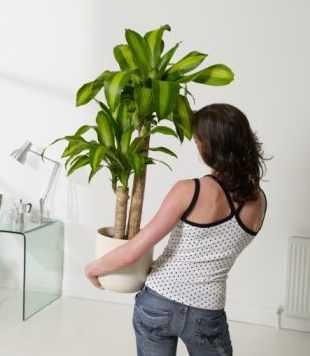 D nde colocar las plantas para decorar tu casa tendencias decora ilumina - Las mejores plantas de interior ...