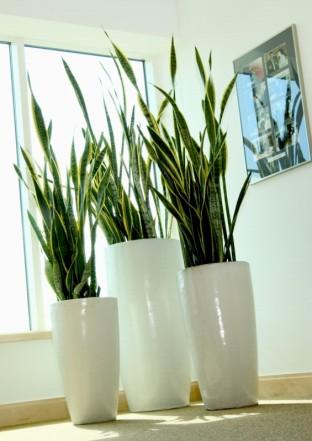 Consejos para comprar plantas de interior jardin decora ilumina - Estanteria para plantas de interior ...