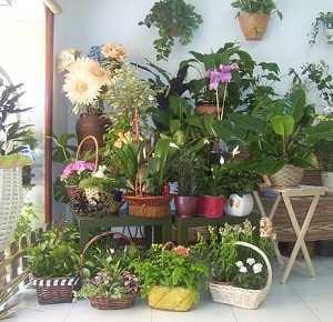 C mo cuidar tus plantas en primavera jardin decora ilumina for Jardines bien decorados