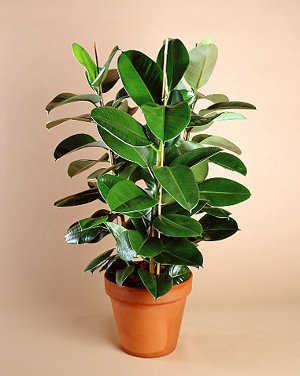 Plantas de interior seg n tu decoraci n jardin decora - Plantas de interior para salon ...