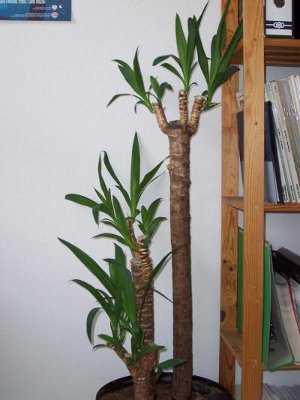 Plantas de interior seg n tu decoraci n jardin decora for Plantas decorativas amazon