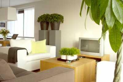 Tips para decorar la casa con plantas tip del dia - Casa al dia decoracion ...