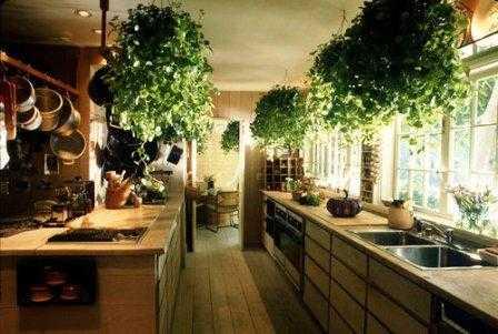 Tips para decorar la casa con plantas tip del dia - Luces para plantas de interior ...
