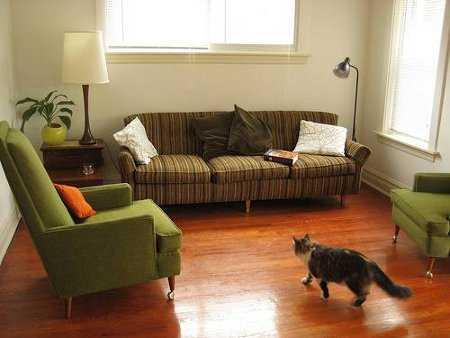 Decoraci n vs mascota que tu casa no se convierta en un for Como ahuyentar gatos del jardin