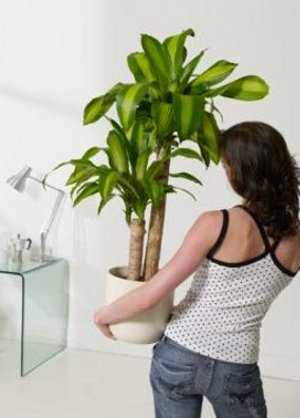 El feng shui en casa feng shui decora ilumina for Plantas artificiales para interiores