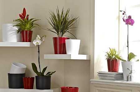 Novedades en plantas y macetas para el interior de las for Como decorar el interior de mi casa