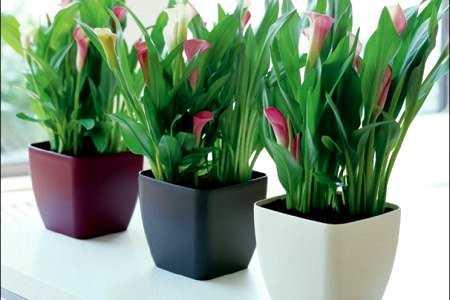 Novedades en plantas y macetas para el interior de las for Plantas crasas interior
