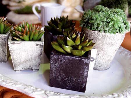 Macetas para interiores hogar for Estanteria plantas interior