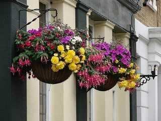 exterior ms o menos espaciosa o una puerta principal grande es poner una planta colgante una opcin puede ser tipo hiedra y tu casa se ver muy - Plantas Colgantes Exterior