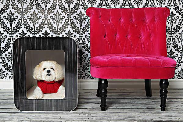 Mantén cómodo a tu perrito dentro de tu casa