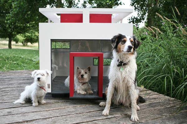¿Tienes más de un perro? ¡Linda casita!