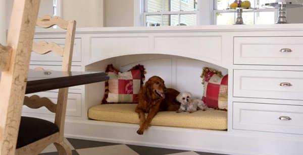 Mantén el espacio limpio para tu perro dentro de tu casa